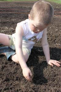 Teaching the boys how to plant seeds and evaluating the differences between seed varieties is so fun! Here Sam is planting cilantro.