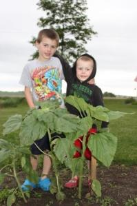 Keith and Sam thought this would be a great way to measure the growth of the sunflower.