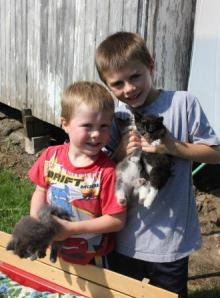 When we are working in the garden, the boys also find a lot of time to tame kittens. In fact, it is very amazing to watch boys go from rough and tough to very gentle and kind with the kittens.