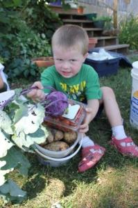 Sam is displaying the cherry tomatoes, potatoes and a kohlrabi that was ready.