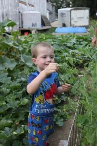 Sam found the peas are ready.