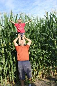 Keith and Sam both wanted their Dad to lift them up to see how tall or neighbors corn was. As you can see, it is quite tall. This height helps to generate additional photosynthesis to help the plant produce a good crop. Did you know that field corn can grow between 8-12 feet high and an average ear of corn will have 800 kernels.