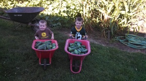 Look what the boys found in the garden, just a few cucumbers.