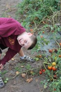 Picking tomatoes can get a bit tiring and lead to crazy boys.
