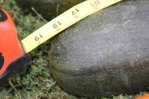 The first science project that we concluded this weekend was harvesting the large zucchini that the boys wanted to grow. This one topped out at 18 1/2 inches.