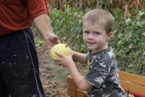 Sam harvesting gourds.