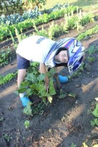 Yes, I know ... it must be a rough day harvesting in the garden if we are wearing a dirt bike helmet. Can you tell Keith is excited to wear this in the soap box derby car race.