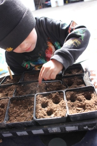 Sam and I were busy planting again. He made holes for the seeds with his fingers and dropped the seeds into the holes and gently covered them up.
