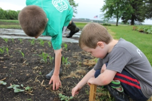The boys were checking out the cucumbers that have emerged and doing some weeding so the weeds don't overtake the crops.
