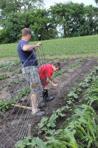 Steve and the boys installed the cucumber trellis this weekend. This will allow the cucumber plants to grow on the fence the cucumbers will grow and drop between the slats in this old fence. Thus keeping the cucumber cleaner since it is off of the ground.