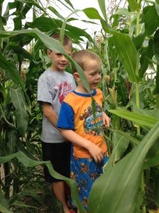 The boys have been inspecting the ornamental corn. It has been tasseling. Ask the boys about this process - I am sure you will be surprised at what is growing on in the garden.