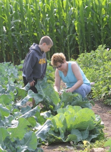 Keith was busy showing Grandma how to harvest cauliflower.