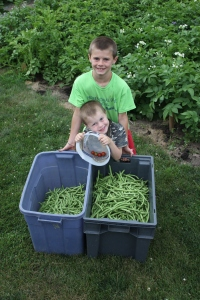 Boy were they glad to be finished harvesting the peas, cucumbers and green beans.