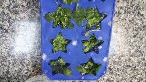 Wondering how to preserve your herbs for making salsa or chilli? I wash them and place in a small ice cube tray and then place in a small Ziploc bag so I have them when I need them.