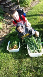 The onions are growing and the carrots are delicious. The harvest was rewarding!