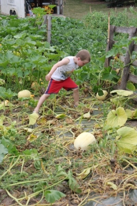 This is how Sam feels about the Squash Bugs attacking the pumpkin plants.
