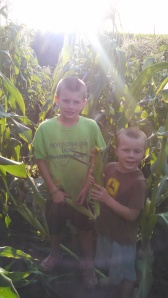 The boys are still learning how to pick sweet corn so we apologize if some of the ears are a little smaller. By the end of the season, we should have some professional harvesters.