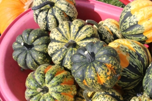 The Carnival squash has a thick exterior and has spotted and striped colors of white, orange, yellow and green, depending on its level of maturity. The presence of post-harvest green coloring indicates that the squash is still at its peak maturity. As the squashes ages, it will eventually only maintain orange and cream colors. It is semi-dry and firm in texture, fragrant and its flavoring, mild. The squash's true flavors only emerge once cooked. Then its flesh becomes richer, buttery, nutty and sweet.