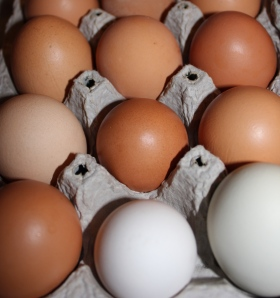 We have a variety of different colored egg shells because we have different breads of chickens. The brown shelled eggs are from Red Stars, green shells from Araucana and white shelled eggs from Leghorns.