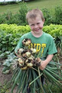Just a few onions.