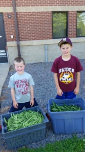 A special shout out to a few of our shareholde families, Staabs and Garlinskis, for helping to harvest 70# of green beans which were donated to the food shelf.