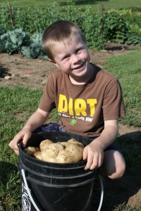 Potatoes are like digging for gold. Tons of fun and hard work!