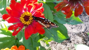 The butterflies and bees abound on the flowers.