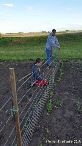 Learning to fence is part of living at our place. We will use trellis fro our sugar snap peas and cucumbers.