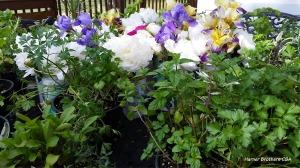 Herbs, Peonies and Iris