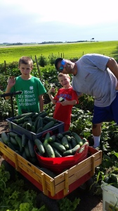 While we are exhausted from the fair, we were happy to see bountiful produce to harvest.