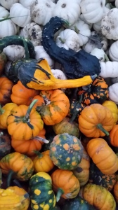 The first round of gourds have been harvested. A lot of fun differences.