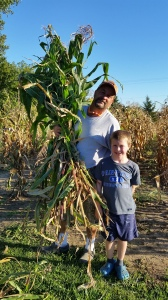 We were happy to have a beautiful night on Monday to harvest the corn stalks for the corn shocks.