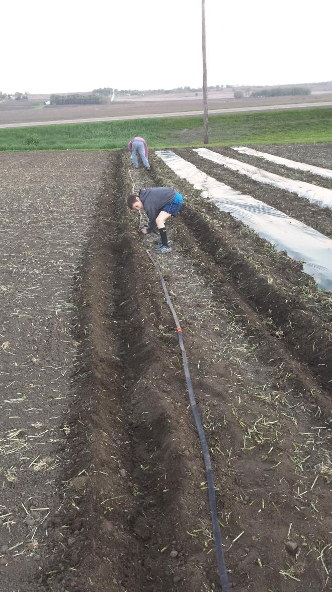 5-10-17 mulch and irrigation